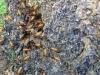 Hij tikt op een termietennest, waardoor de soldaten naar buiten komen en op zoek gaan naar de vijand