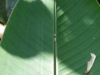 Eitjes van vlinders