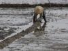 Smalle dijkjes worden gebouwd om het water vast te houden