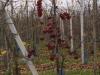 Appelboomgaarden