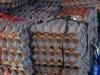 Eieren, honderden eieren