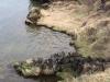 Mývatn, vogelgebied