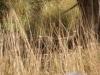 Rhanthambhore National Park, zone 2 - zoek de tijger