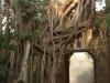 Rhanthambhore National Park
