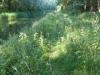Ruilverkavelingsbos van 'boer Koome'