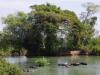 De buffels nemen een duik in de Mekong River