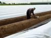 Polen steken de asperges