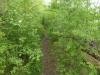Een smal, dichtbegroeid en avontuurlijk pad