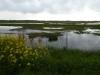 Een mooi natuurgebied langs de Kanaaldijk