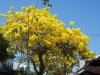 Mimosa, Key West