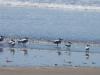 Het strand van Las Lajas en haar badgasten