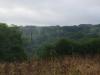 Uit het bos stijgen de dampen op