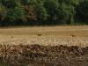 Herten vluchten voor ons weg