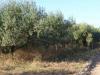 We lopen over stoffige wegen, tussen de olijfbomen en wijngaarden