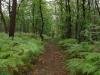 Het landschap is veranderd, bosrijker en groener