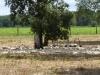 Verboden toegang voor onbevoegden, de ganzenfarm voor foy gras