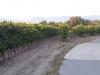 We lopen door de druivenvelden