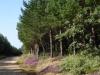 Overwegend eikenbomen, af en toe een den en prachtige paarse heide