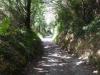 Heerlijk in de schaduw, de laatste kilometers naar Triacastela