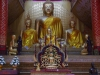 Boeddha's in het goud