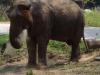 Elephant Valley, hebben de olifanten hier nu echt zo'n fijn bestaan