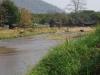 Olifanten grazen aan de oever van de rivier en nemen zelfs een duik