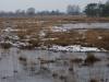 Mispeleindsche- en Neterschelse Heide