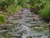 Watertjes tussen de velden
