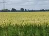 We lopen over geasfalteerde wegen, door akkerlanden met graan