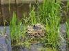 Het Kikkerpad