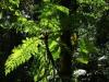 Nevelwoud Monteverde