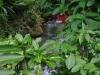 Het hotel heeft een kleine tropische tuin langs de rivier, waar we 's avonds kikkers spotten