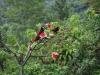 Onder het platform foerageren kleurrijke vogels
