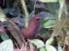 Volgens de gids beschermt hij zijn jong, die uit het nest gevallen moet zijn