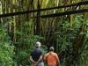 Hij legt ook aan om een klein rondje door de jungle te lopen, langs gigantische bamboestruiken