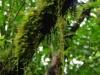 De bomen en planten zitten stijf onder het mos