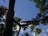 Een eekhoorn rent weg