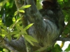 De luiaards hangen ook vlak boven ons huisje