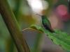 Colibri