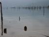 In de lagune worden oesters gekweekt