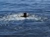 Een frisse duik