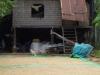 Rijst ligt te drogen op straat, terwijl het verkeer voorbij raast