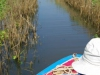 Dwars door het groen gaan varen we naar het Tonlé Sap Lake