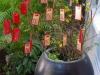 Alles wordt in gereedheid gebracht voor het Chinese Nieuwjaar
