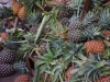 Ananas, heerlijk zoet