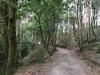 De camino loopt door het bos, met naar de hemel reikende eucalyptussen