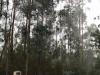 Mist tussen de eucalyptussen, we zitten al flink hoog