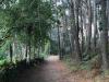 Ook nu weer dennen en eucalyptussen