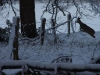 Hert in winterlandschap