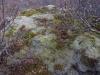 Mossen, korstmossen